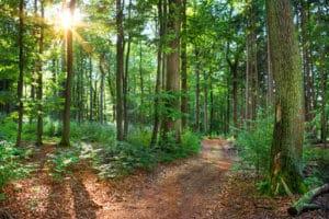Waldweg mit dem Hundebuggy