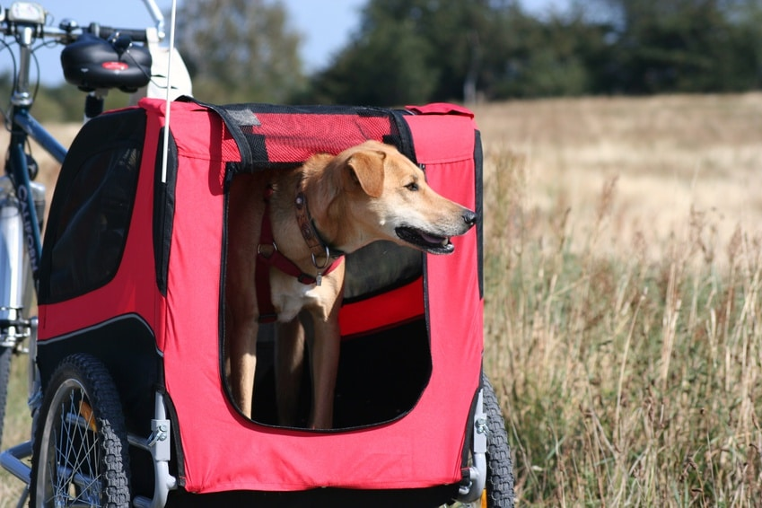 Hunde Fahrradanhänger Befestigung