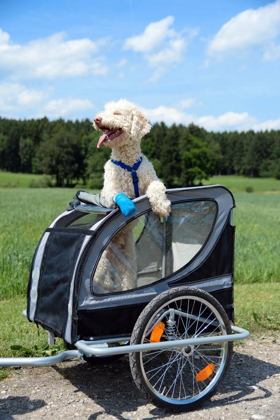 Hunde Fahrradanhänger Tour