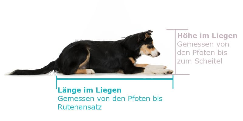 Hund vermessen im liegen - hundebuggy