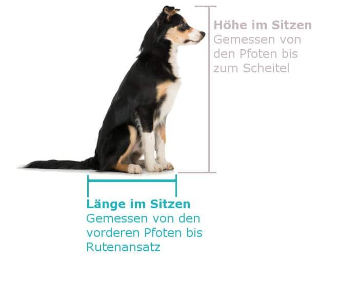 Hund vermessen im sitzen - hundebuggy
