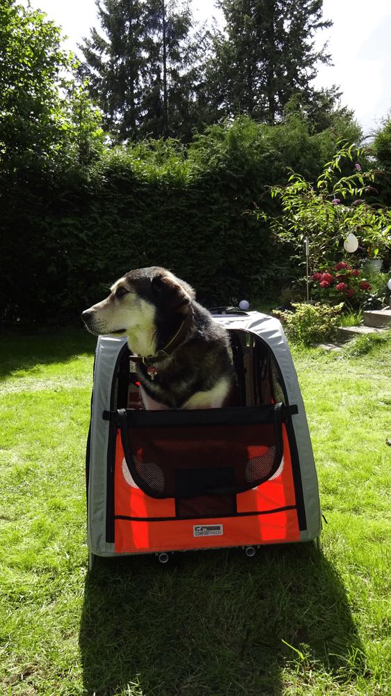 Mein Hund im Comfort Wagon M Hundeanhänger