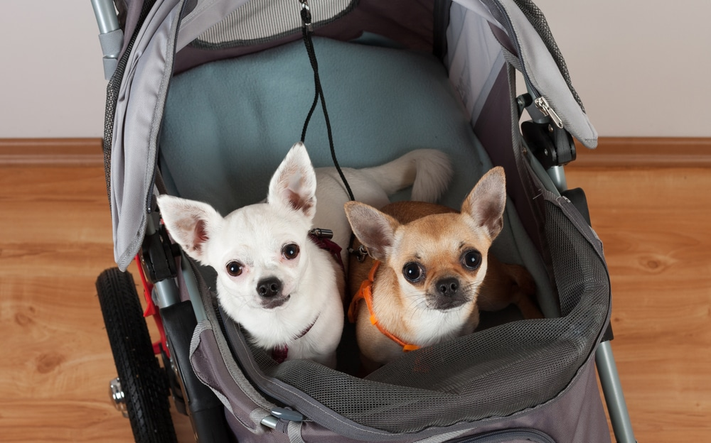 Hunde im Hundebuggy mit Luftreifen