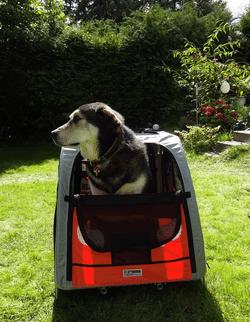 Mein Hund im Comfort Wagen Hundefahrradanhänger